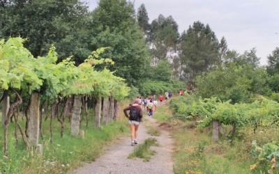 Cincuenta personas participaron en la jornada de senderismo organizada por la Ruta do Viño Rías Baixas en As Neves