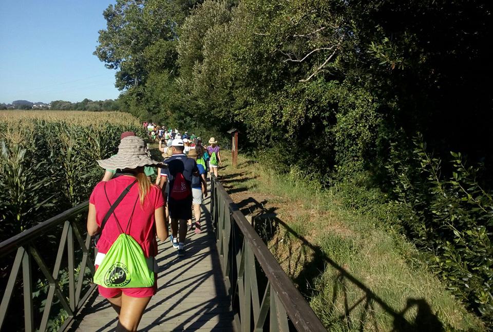 Más de cincuenta personas participaron en la jornada de senderismo organizada por la Ruta do Viño Rías Baixas