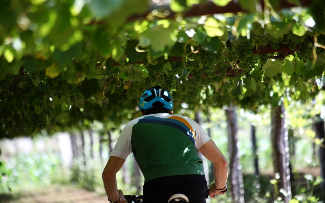 Descubre el recorrido detallado de la 4ª BTT Ruta do Viño Rías Baixas