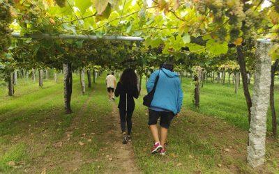 La Ruta do Viño Rías Baixas propone dos jornadas de senderismo 28 y 29 de agosto por las subzonas de O Rosal y Val do Salnés