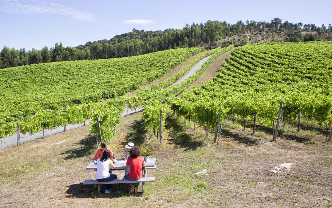 La Ruta do Viño Rías Baixas celebra este fin de semana sus Jornadas de Puertas Abiertas con multitud de actividades