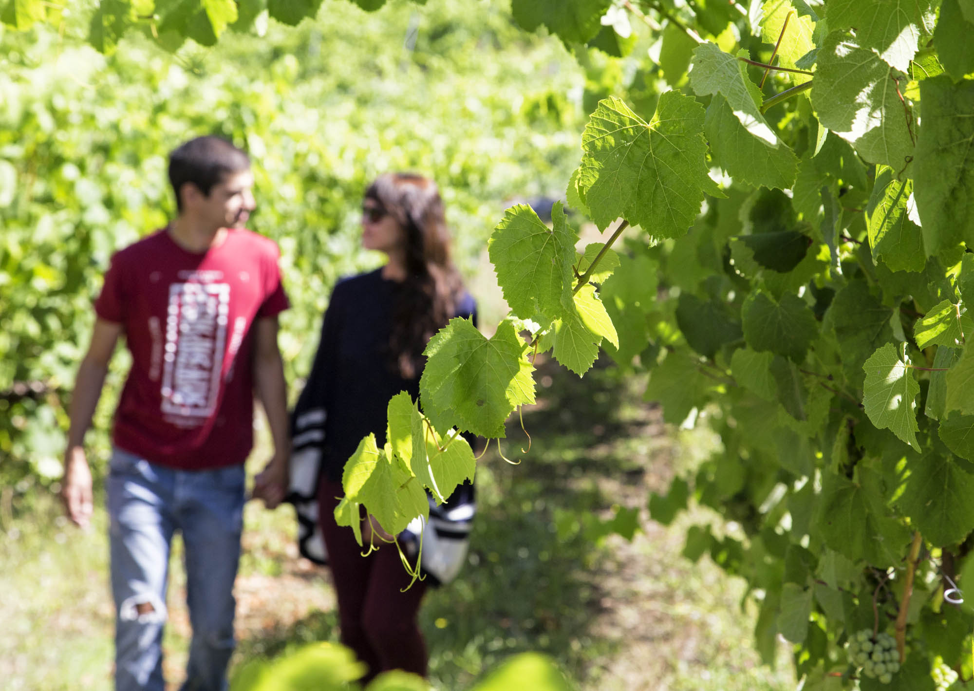 El enoturista tipo de la Ruta do Viño Rías Baixas tiene entre 26 y 45 años, viaja en pareja, se desplaza en su coche y pernocta en hoteles