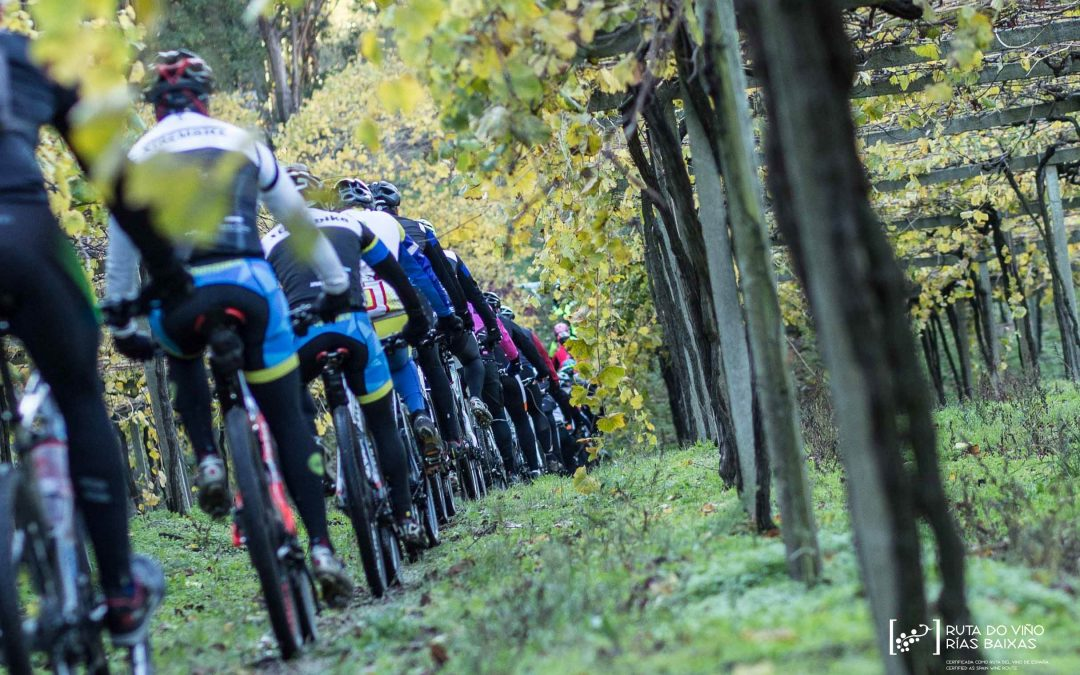 Últimos días para inscribirse en la IV BTT Ruta do Viño Rías Baixas que se celebra este domingo 20 de octubre en Meis